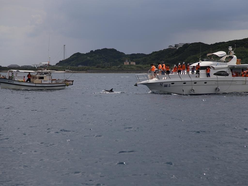 イルカがいるかの五島列島